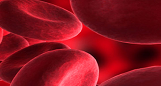blood cells | Photo Credit: iStock