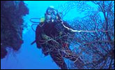 Commercial Diving - Copyright WARNING: Not all materials on this Web site were created by the federal government. Some content � including both images and text � may be the copyrighted property of others and used by the DOL under a license. Such content generally is accompanied by a copyright notice. It is your responsibility to obtain any necessary permission from the owner's of such material prior to making use of it. You may contact the DOL for details on specific content, but we cannot guarantee the copyright status of such items. Please consult the U.S. Copyright Office at the Library of Congress � http://www.copyright.gov � to search for copyrighted materials.