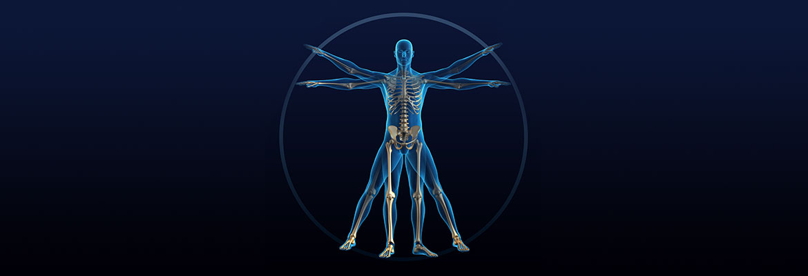 vitruvian man | Photo Credit: iStock.com: 157315276 Copyright:comotion_design