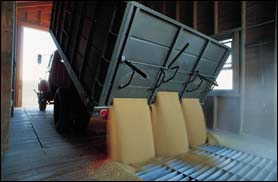 Safety and Health Topics | Grain Handling | Occupational