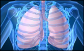 Occupational Asthma - Copyright WARNING: Not all materials on this Web site were created by the federal government. Some content � including both images and text � may be the copyrighted property of others and used by the DOL under a license. Such content generally is accompanied by a copyright notice. It is your responsibility to obtain any necessary permission from the owner's of such material prior to making use of it. You may contact the DOL for details on specific content, but we cannot guarantee the copyright status of such items. Please consult the U.S. Copyright Office at the Library of Congress � http://www.copyright.gov � to search for copyrighted materials.