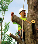 Tree Care Work