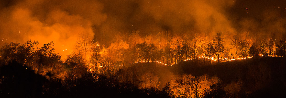Wildfires | Forest fire burning, Wildfire at night in Chiangmai, Thailand | Photo Credit : mack2happy