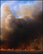 Thumbnail image of wildfires graphic