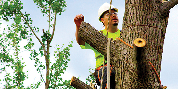 Tree Care Industry