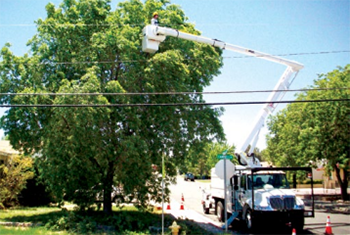 treecare workers - Photo courtesy of Altec