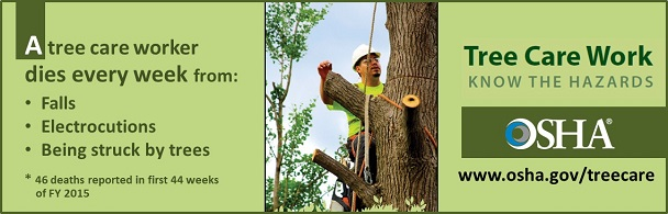 A tree care worker dies every year from falls, electrocution, being struck by trees. www.osha.gov/treecare