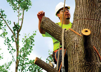 Photograph of a tree care worker